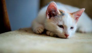 как избавиться от глистов у кошки