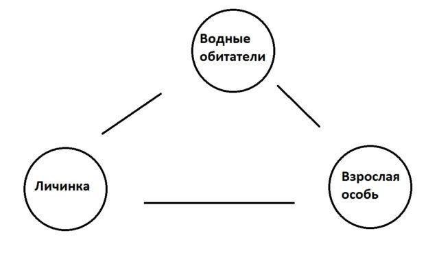 Жизненный цикл конского волоса