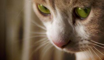 Ленточные глисты у кошек и собак