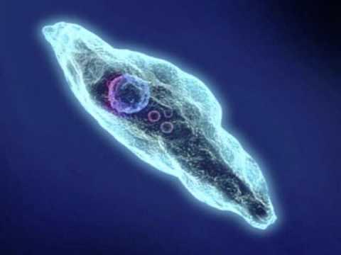 тест наличие паразитов в организме человека