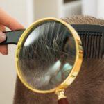 Лечение вшей и гнид в домашних условиях