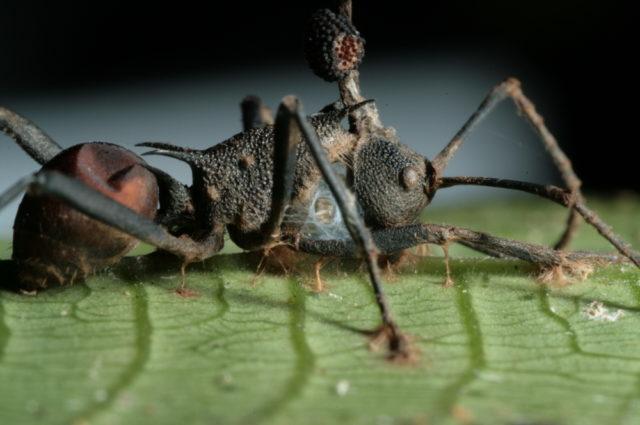 В какой среде обитания обитают паразиты, глисты