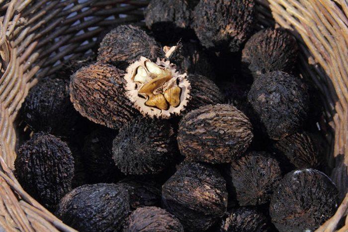 Черный орех от паразитов