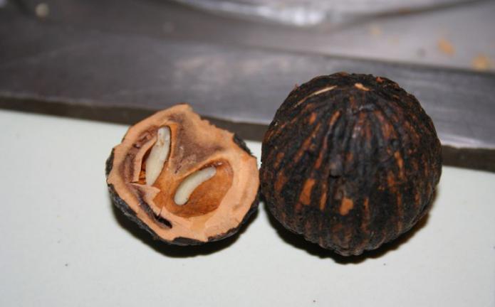 Значение черного ореха в борьбе с паразитами