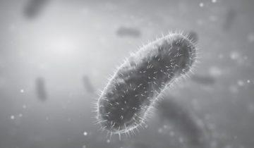 Бактерия убийца