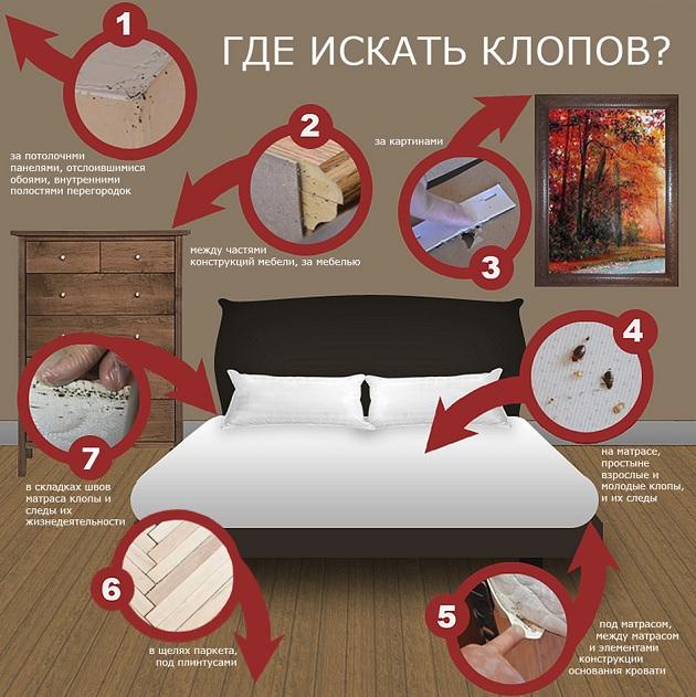 Как вывести постельных клопов самостоятельно в домашних условиях?