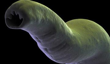 Как поступать при паразитах