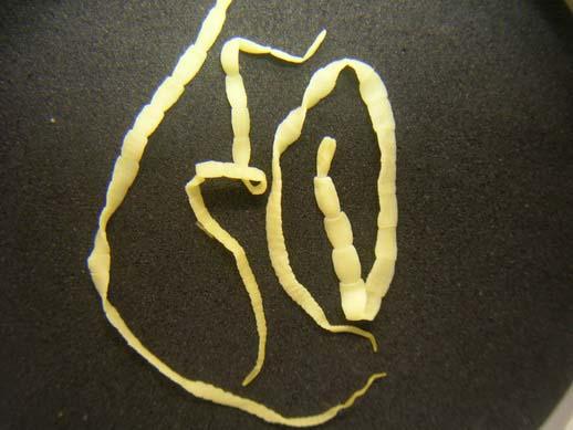 Огуречные цепни