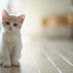 Может ли человек заразиться глистами от кошки