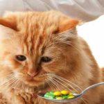 Кот после таблетки от глистов