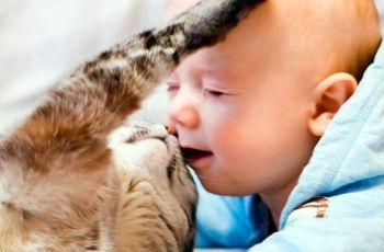 Токсокара у детей