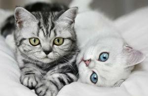 Инструкция по применению Дюфалака для собак и кошек