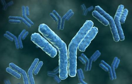 Токсоплазма (igg антитела)