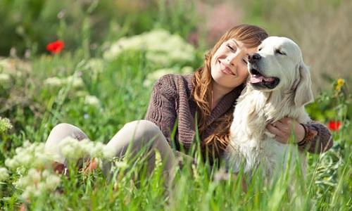 Можно ли заразиться глистами от собаки