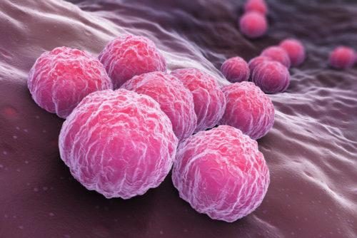 ДНК Хламидии Трахоматис