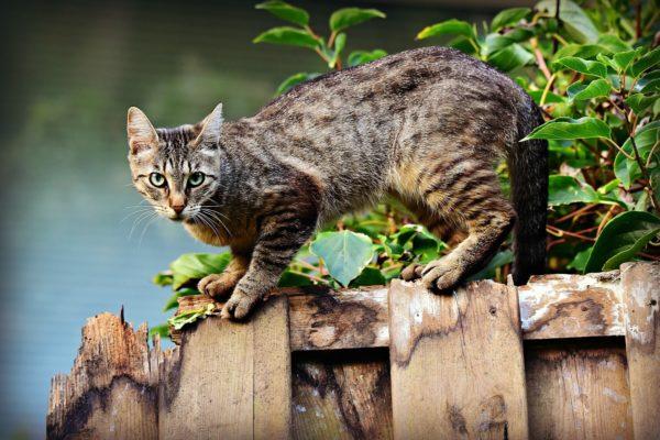 Как узнать есть ли глисты у кошки