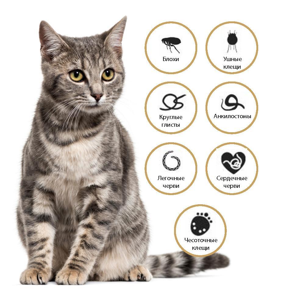 Адвокат от глистов и блох для кошек