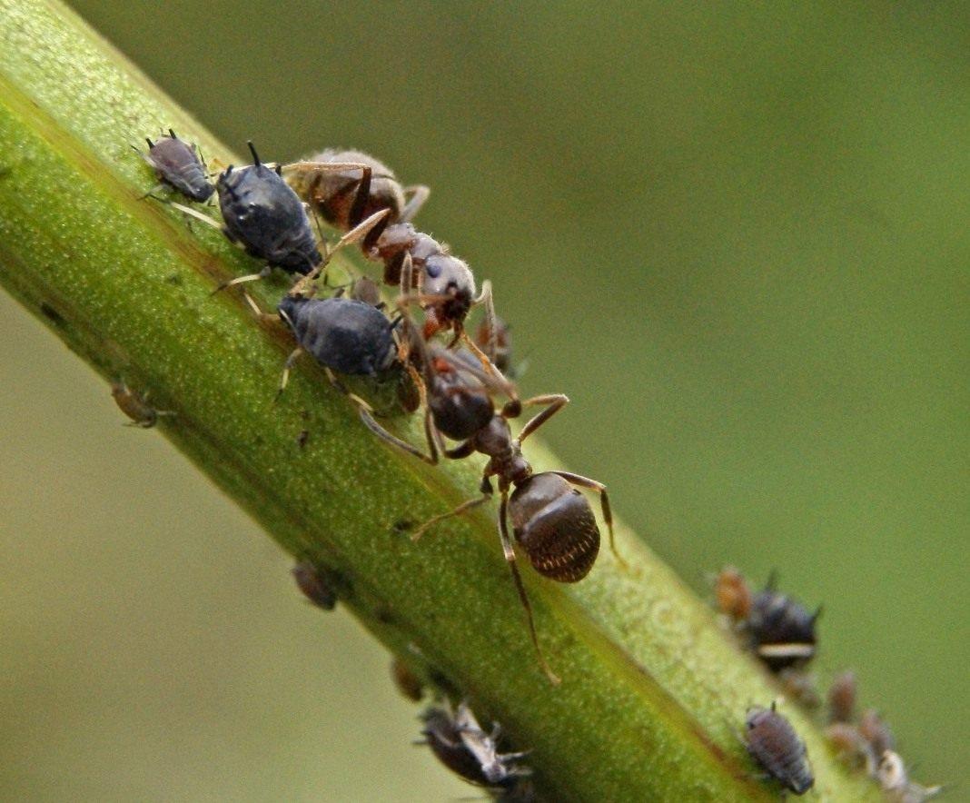 Примеры паразитарных взаимоотношений среди животных и растений