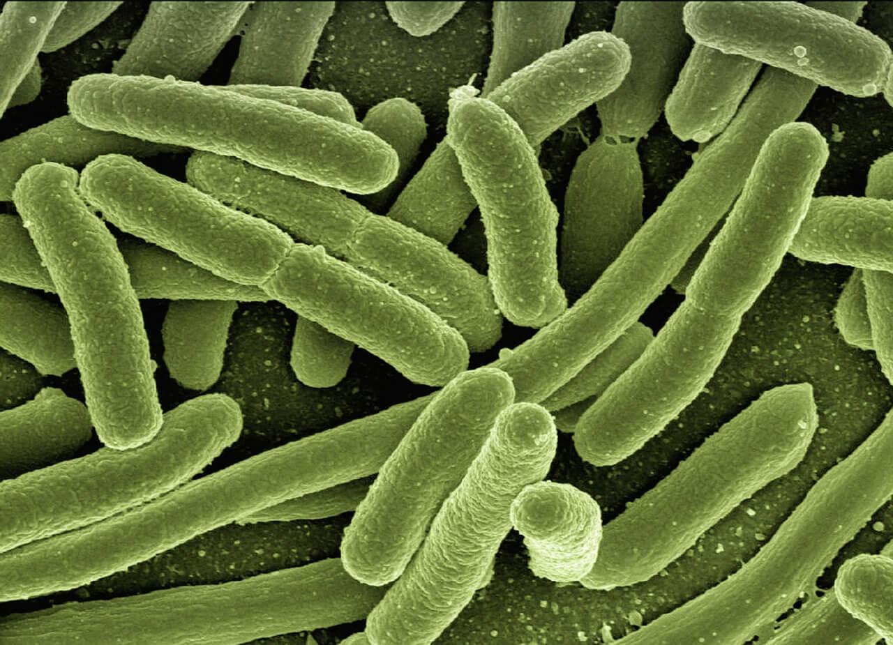 Бродильные бактерии