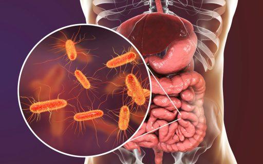 Подробнее о Enterobacter agglomerans