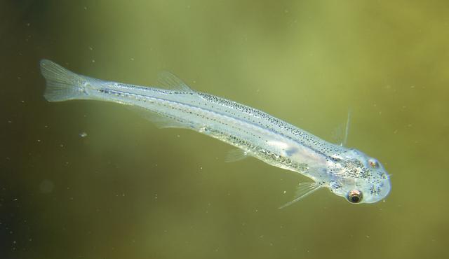 Где обитают паразиты (черви, грибы, бактерии) в организме человека
