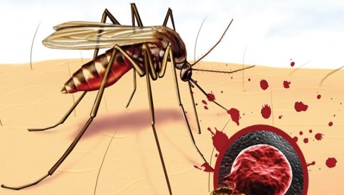 Профилактика малярии перед поездкой: специфические меры, препараты, прививки