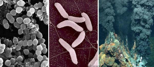 Что собой представляют серобактерии?