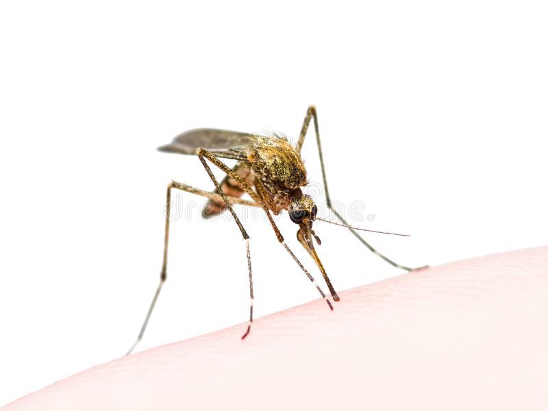 Желтая малярия